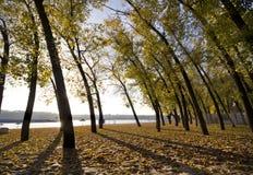 Gele die de herfstbladeren op het zand door de zon en silhoue wordt aangestoken Royalty-vrije Stock Foto's