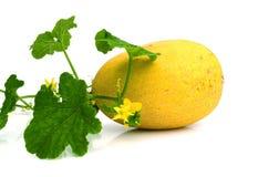 Gele die het eten meloen op witte achtergrond wordt geïsoleerd Royalty-vrije Stock Afbeeldingen