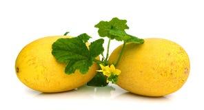 Gele die het eten meloen op witte achtergrond wordt geïsoleerd Stock Foto