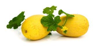 Gele die het eten meloen op witte achtergrond wordt geïsoleerd Royalty-vrije Stock Afbeelding