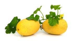 Gele die het eten meloen op witte achtergrond wordt geïsoleerd Stock Fotografie