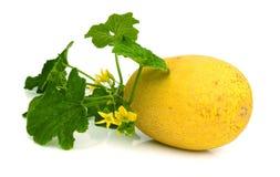 Gele die het eten meloen op witte achtergrond wordt geïsoleerd Royalty-vrije Stock Foto