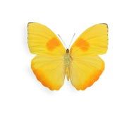 Gele die vlinder op wit wordt geïsoleerd Royalty-vrije Stock Afbeeldingen