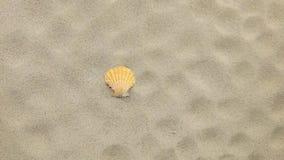 Gele die zeeschelp en haar drukken door wind worden weggeblazen stock video