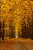 Gele donkere de herfstdag van de lindesteeg Royalty-vrije Stock Foto's
