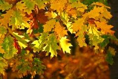 Gele drie bladeren royalty-vrije stock fotografie