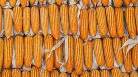 Gele droge korrels De achtergrond van de textuur Royalty-vrije Stock Afbeeldingen