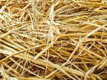 Gele droge stro natuurlijke achtergrond stock afbeelding