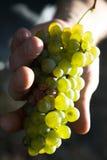Gele druif Royalty-vrije Stock Afbeeldingen