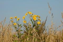 Gele eenzame mooie bloem op het gebied royalty-vrije stock afbeeldingen