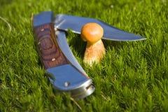Gele eetbare paddestoel Stock Foto