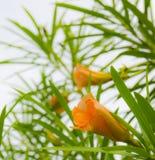Gele en bladerenbloem Stock Afbeeldingen