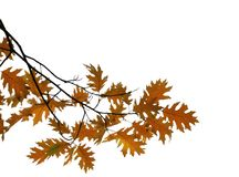 Gele en bruine bladeren backgr Royalty-vrije Stock Foto