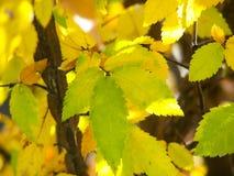 Gele en groene bladeren stock foto