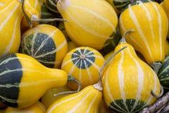 Gele en groene sierpompoenen als achtergrond stock foto's