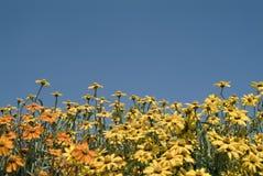Gele en oranje bloemen Stock Afbeelding