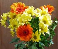 Gele en oranje chrysanten Stock Afbeelding
