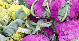 Gele en purpere bloemkool op vertoning Royalty-vrije Stock Foto's