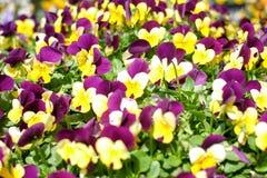 gele en purpere naadloze bloemen royalty-vrije stock foto