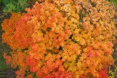 Gele en Rode bladeren De herfst Stock Fotografie