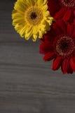 Gele en rode gerberabloemen op de houten achtergrond Royalty-vrije Stock Foto