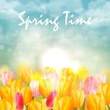 Gele en roze tulpen en zonlicht Royalty-vrije Stock Fotografie