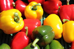 Gele en Spaanse pepers Stock Fotografie