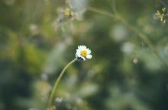Gele en witte bloem met een groene achtergrond stock afbeeldingen
