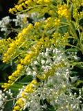 Gele en witte bloemen stock afbeelding