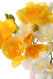 Gele en witte fresia Royalty-vrije Stock Afbeelding