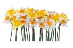 Gele en witte narcissen royalty-vrije stock fotografie