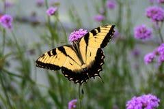 Gele en Zwarte Vlinder Stock Foto's
