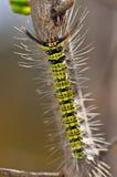 Gele en zwarte wormen Stock Afbeelding