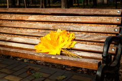 Gele esdoornbladeren, de herfstpark, gouden de Herfsttijd, het geel Royalty-vrije Stock Fotografie