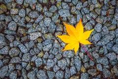 Gele esdoornbladeren op de steen Stock Foto