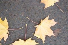 Gele esdoornbladeren op het asfalt De daling van het de herfstblad, hoogste mening Stock Afbeelding