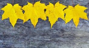 Gele esdoornbladeren op oude houten achtergrond met exemplaarruimte Stock Afbeeldingen