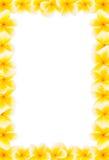 Gele frangipani volledige grens stock afbeeldingen