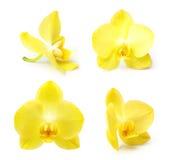 Gele geïsoleerde orchideebloem Royalty-vrije Stock Afbeeldingen