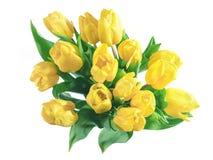 Gele geïsoleerde tulpen stock foto's