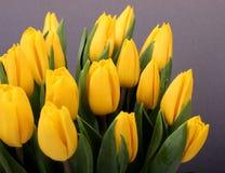 Gele geïsoleerdet tulpen royalty-vrije stock afbeeldingen
