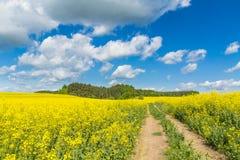 Gele gebieden Stock Foto's