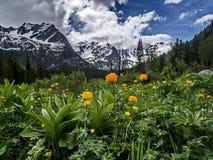 Gele gebiedsbloemen tegen bergen en bergmeer Bloemvallei Bezinning van snow-capped bergen in het meerwater royalty-vrije stock foto