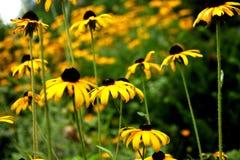 Gele gegroepeerde bloemen Royalty-vrije Stock Afbeeldingen