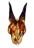 Gele geitschedel met hoornen & x28; frontal& x29; Royalty-vrije Stock Fotografie