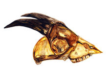 Gele geitschedel met hoornen & x28; profile& x29; Royalty-vrije Stock Fotografie