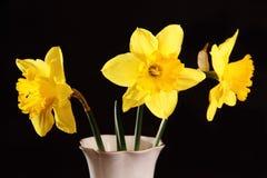 Gele gele narcissen in een vaas Royalty-vrije Stock Afbeeldingen