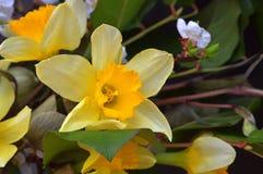 Gele gele narcissen en kersenbloesems Het boeket van de lente De lente tim royalty-vrije stock foto