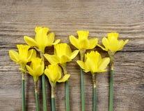 Gele gele narcissen op achtergrond Stock Afbeelding