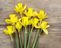 Gele gele narcissen op achtergrond Royalty-vrije Stock Afbeelding